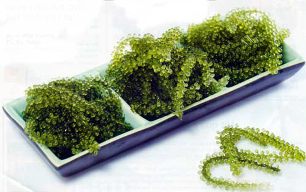 Algae Grapes